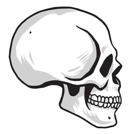 Skull Vector illustration Drawing Vector Illustration