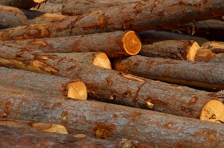 Dump timber Stock Photo