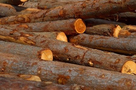 Dump timber Stock Photo