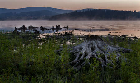 Wetland and heath with roots in Lipno, morning landscape with a lake. photo