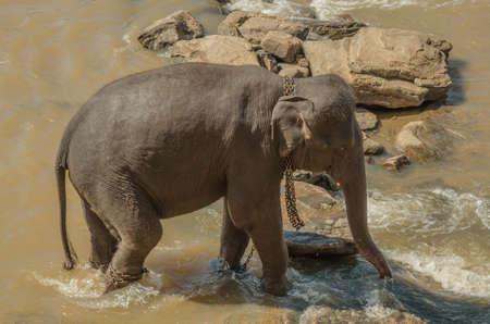 pozo de agua: Elephants bathe in the river, elephants drink at the waterhole.