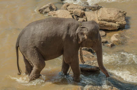 pozo de agua: Los elefantes se ba�an en el r�o, los elefantes beber a la charca.