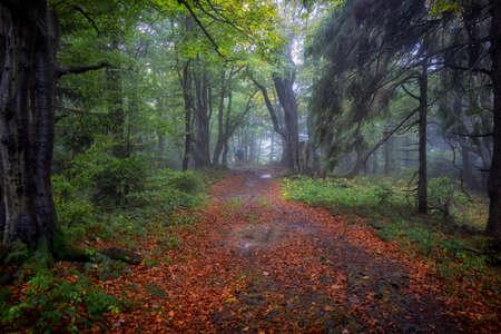 Countryside road.Forest landscape.Misty landscape with forests.Mountain forest landscape with clouds in sunlight.