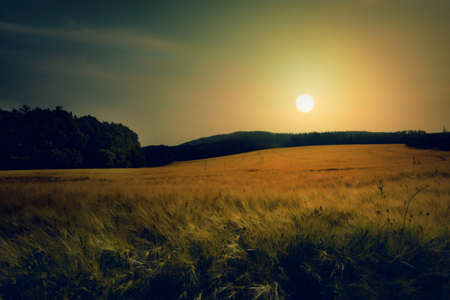 Sunset on field of grain.Landscape with fields of grain.