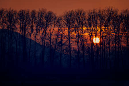 Sunset trees silhouettes.Fiery sunset and trees silhouettes. Фото со стока