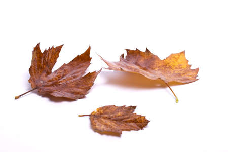 autumn leaves on white background with the bright light