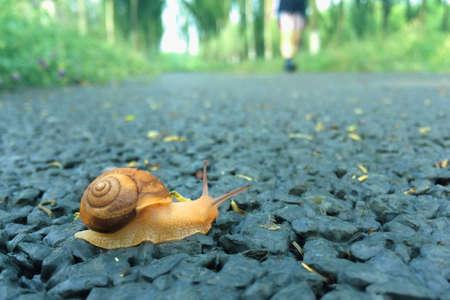 effort: Snail snail