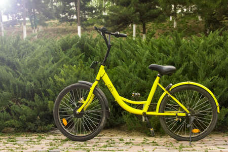 shared: Shared bicycles at park