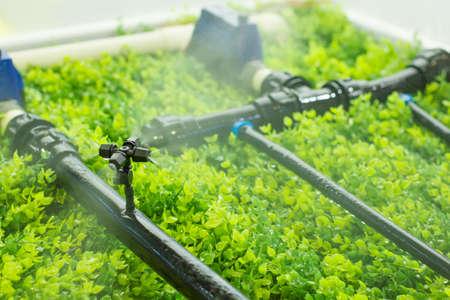 Intelligente landbouw-waternevel Stockfoto