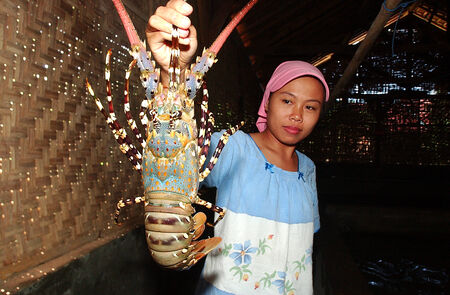 A woman and lobster were maintained in rearing ponds in the Watukarung Village, Pacitan, East Java, Indonesia. Photo taken on May 10th, 2004.