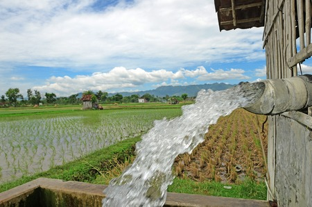 irrigating: Irrigating rice fields belonging to farmers in the village Gontorr, Ponorogo, East Java, Indonesia.