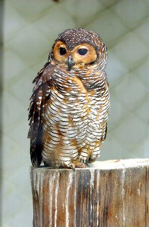 talons: Eagle Owl