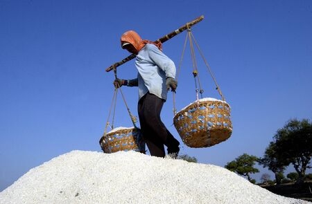 Farmers transporting salt in the salt farm village Tambaksegoroo Sidoarjo East Java Indonesia on October 3 2004. Salt production is one of the main industries in the area which brought modest income for many local families.