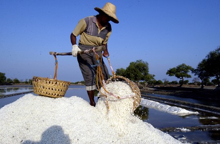production area: Farmers transporting salt in the salt farm village Tambaksegoroo Sidoarjo East Java Indonesia on October 3 2004. Salt production is one of the main industries in the area which brought modest income for many local families.