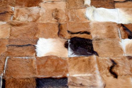 cow skin: Cow skin (texture) Stock Photo