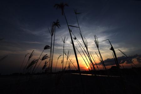 wind blown: Wind blown grass afternoons