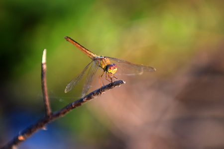 Dragonfly at rest on a branch
