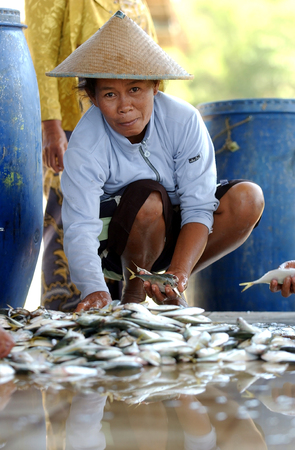 Fishermens wife sorts the fish of her catch at Teleng Beach, Pacitan, East Java, Indonesia on July 11, 2003