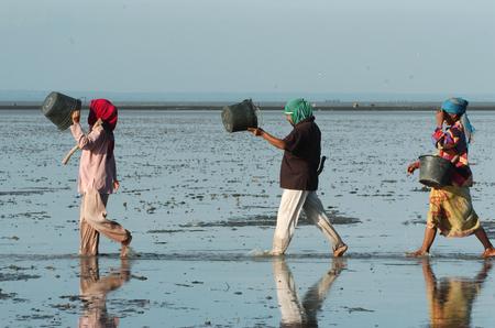Hunting sea worms on the kenjeran beach in Surabaya, Indonesia 報道画像