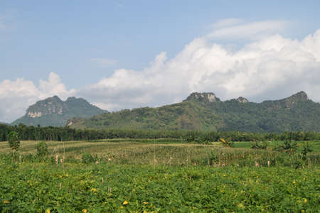 A stretch of fields with a backdrop of Mount Bayang Kaki in Ponorogo, Indonesia. Green village atmosphere very beautiful scenery