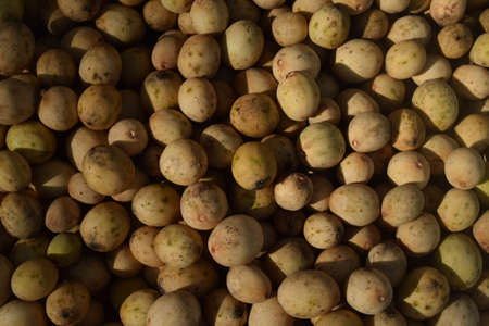 Kepundung fruit - in Indonesian (Baccaurea racemosa) fresh from the tree. native fruit from southeast asia. traditionally used in treating sore eye inflammation.
