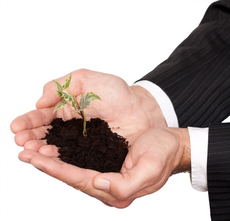 male hands in a business suit holding little tree isolated on white Фото со стока