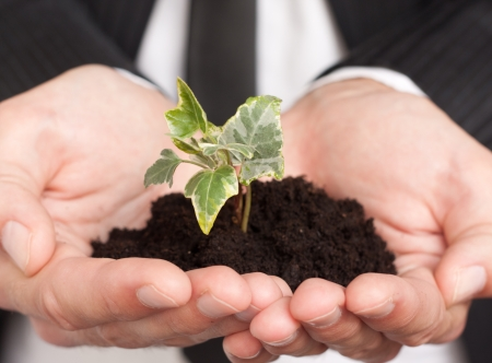 saplings: male hands in a business suit holding little plant