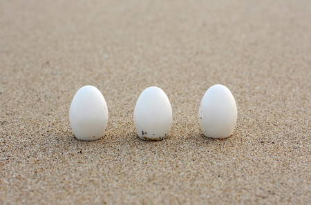 three white eggs in a row on a sand Фото со стока - 9343913