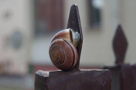 cochlear: Snail