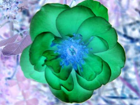Inverted Flower