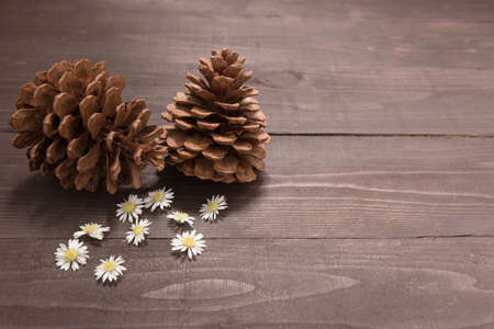 spacial: The arrangement of pine cones are on the wooden background. Space for your text and your design. Stock Photo