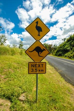 Warning signs  cassowaries, kangaroos  in Australia  photo
