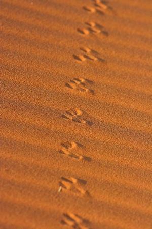 Animal tracks in the sand in the Namib desert, Namibia
