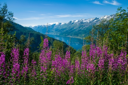 The Sørfjord with flowers in the foreground, Norway