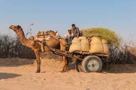 A camel with bags on the trailer, Rajasthan, India Редакционное