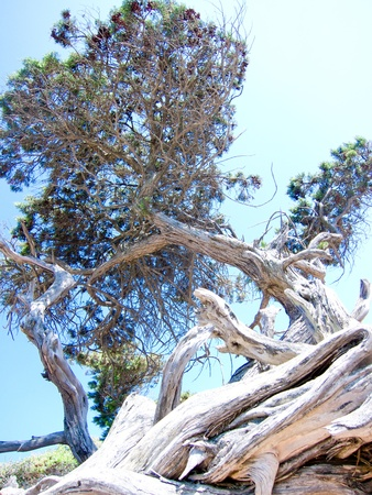albero: Below the tree Stock Photo
