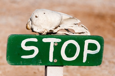 Bleached skull resting on a hand painted stop sign