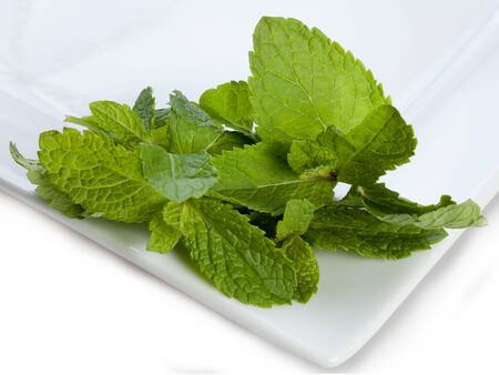 Fresh mint on a white plate Stock Photo - 11217210