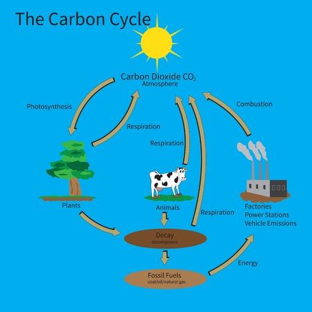 dioxido de carbono: El ciclo del carbono que muestra c�mo el carbono se recicla en el medio ambiente. Vectores