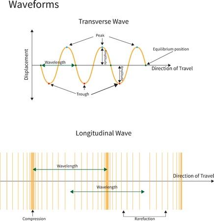 wavelength: Diagrama que muestra las formas de onda transversal y longitudinal.