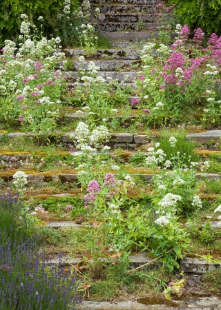 Overgrown and weathered stone steps ascending  Stock Photo