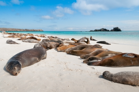 Espanola Island Galapagos with many sea-lions sleeping on a beach  Stock Photo
