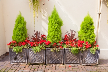 Courtyard garden arrangement of planters