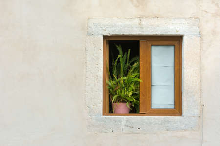Potted plant resting on a window sill of wooden framed window