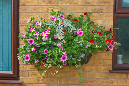 Wall mounted hanging baskets with a range of summer flowers Stock Photo
