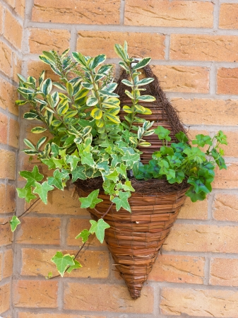 cone shaped: Cone shaped wicker wall mounted flower planter