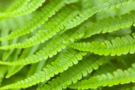 Closeup of green fern fronds