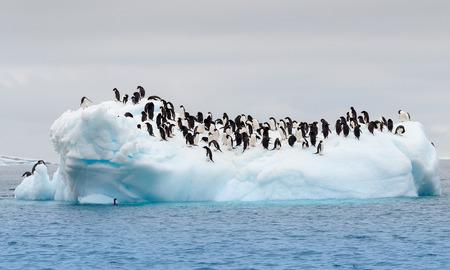 Large group of adele penguins on iceberg Banco de Imagens - 26615777