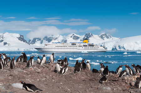 Antarctica penguin colony with cruise liner