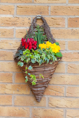 wall mounted hanging basket with spring flowers photo